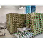 Used individually ventilated Green Line racks by Tecniplast
