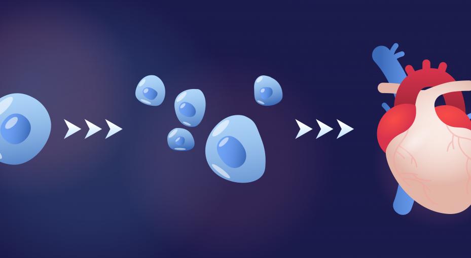 iPSCs therapies,stem cells